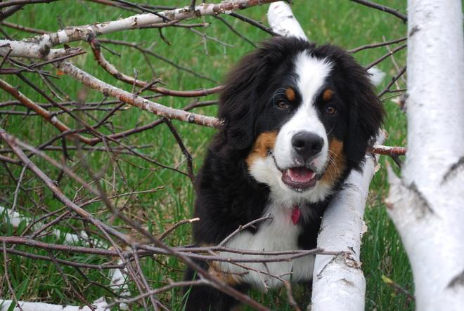 Puppy exploring the outdoors Halton Hills, Ontario Canada