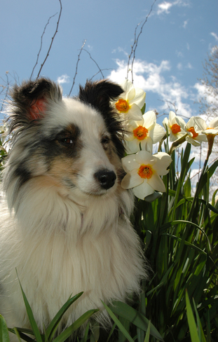 Blizzard enjoying the beautiful spring blooms Stayner, ON