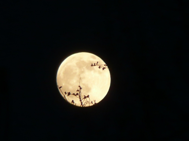 The Moon ,one night from full moon. Grand Falls-Windsor, Newfoundland and Labrador Canada