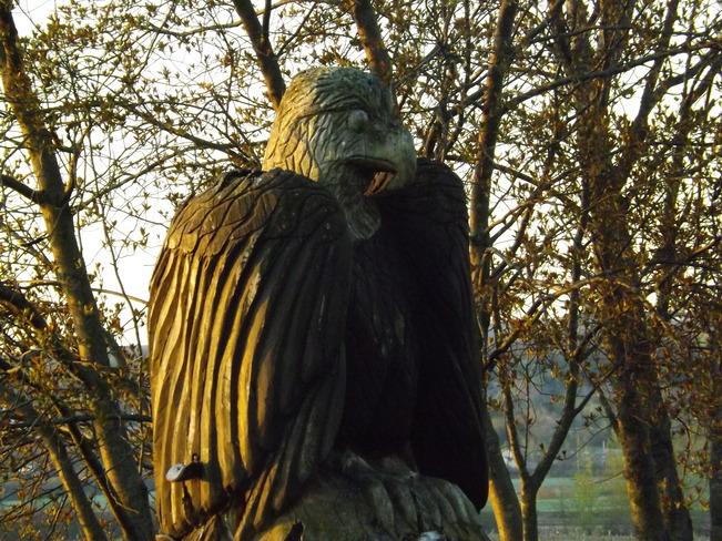 weathered eagle Port Williams, Nova Scotia Canada