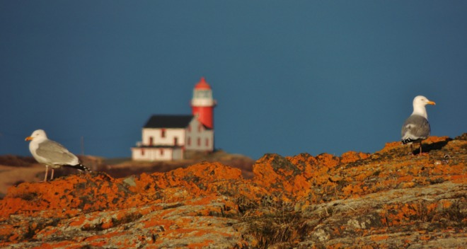 Lighthouse in background. St. John's, Newfoundland and Labrador Canada