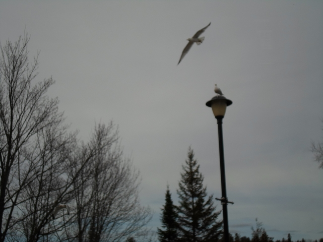 Look At ME/Soaring in the WIND/E.L Elliot Lake, Ontario Canada