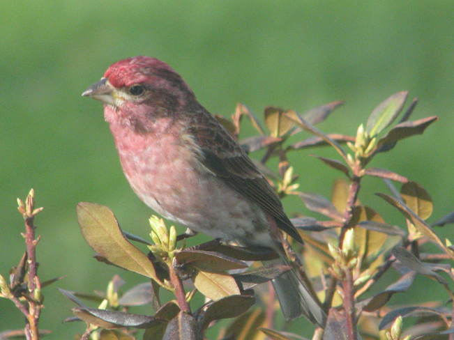 The Purple Finch 291 Maces Bay Road, Maces Bay, NB