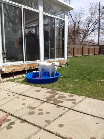 pool weather Winnipeg, Manitoba Canada