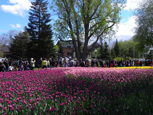 Tulip Festival Ottawa, ON