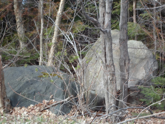 Two Large Bolders/in the Woods Elliot Lake, Ontario Canada