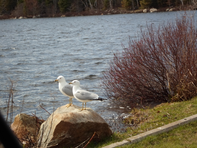 Two on a Rock/waiting for dinner Elliot Lake, Ontario Canada