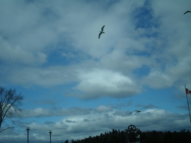 Blue Sky/White Clouds/Sea Gulls Play in Wind Elliot Lake, Ontario Canada