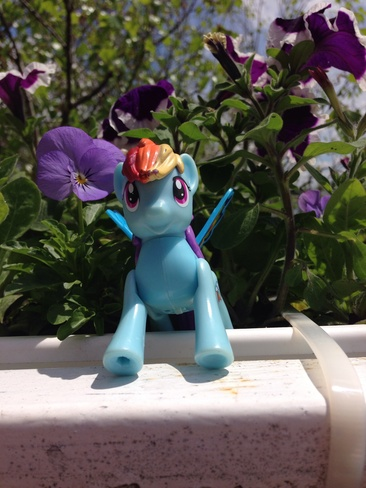rainbowdash gave us spring Richelieu, Quebec Canada