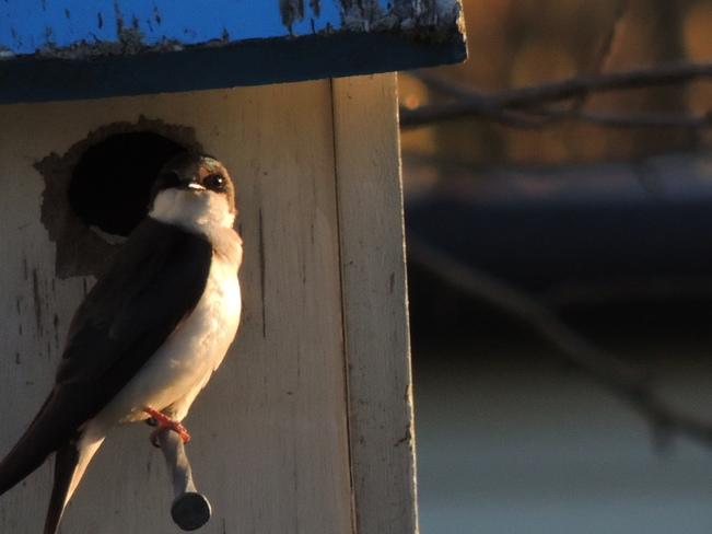 Weekend Birds Nanticoke, ON