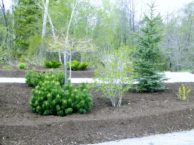 Gardening Project Complete_1a Main St Pasadena NL A0L 1K0