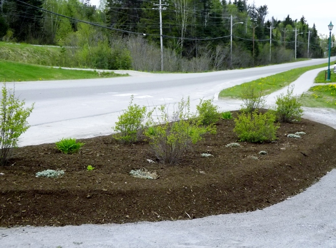 Gardening Project Complete_1b Main St Pasadena NL A0L 1K0