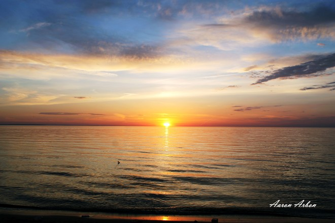 Wasaga Beach Flowers And Sunset