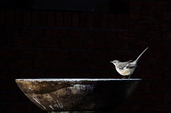 3b. Mockingbird watering hole