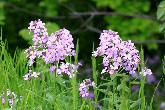 Roadside Flowers Picton, ON