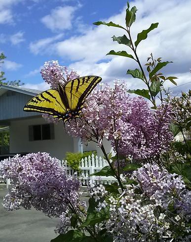 Beautiful Ashcroft, BC