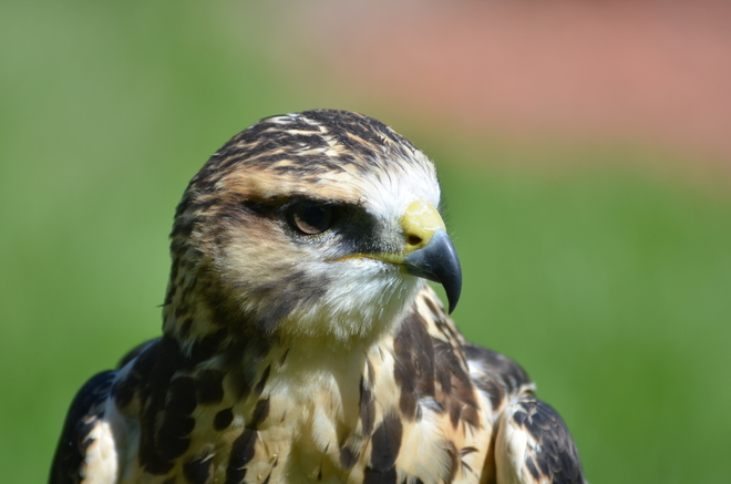 birds of prey in treatment centre Coaldale, AB