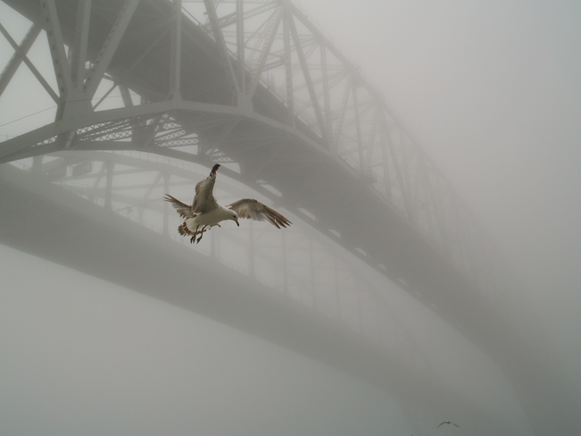 foggy bridges Sarnia, ON