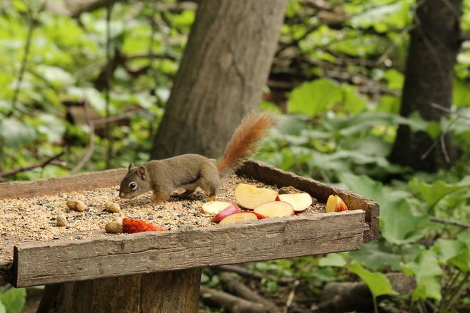 Buffet fit for a squirrel! Kingston, ON