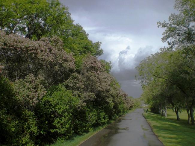 After the rain Regina, SK