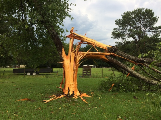 Tree hit by lightning exploded in Citra & Community - Tree hit by lightning exploded in Citra azcodes.com