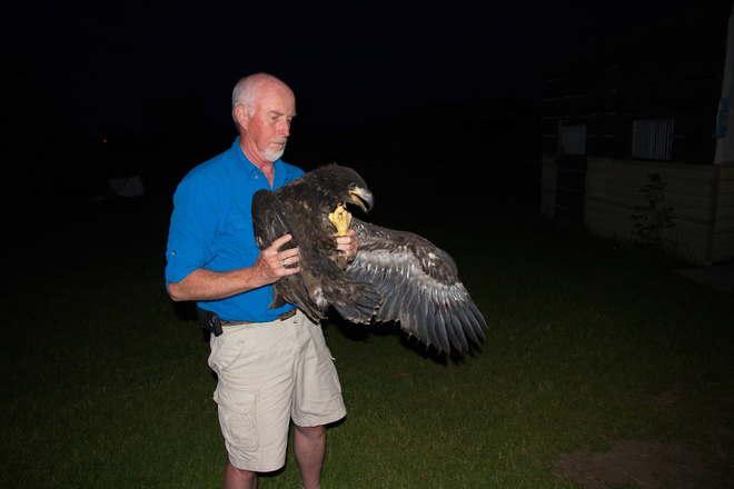 Bald Eaglet Rehab London, ON