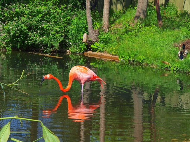 Flamingo Scarborough, Toronto, ON