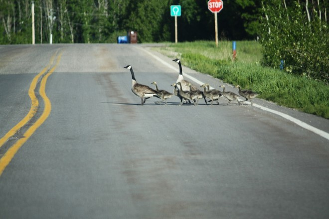 10sec.of my time.Making sure family crosses safely.Lots of people rushing.SLOW D calgary alberta