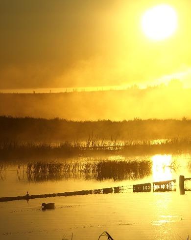 Beautiful Morning Fog Oyen, AB