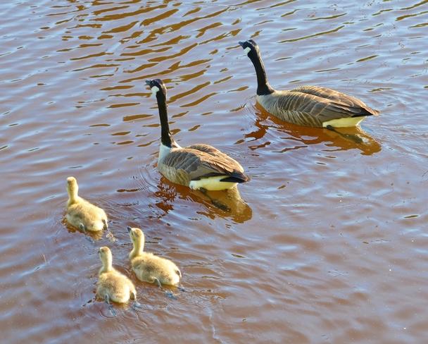 Family Affair. Moncton, NB
