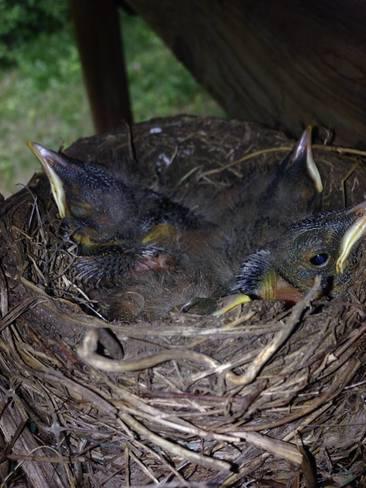 Robins Greely, Ottawa, ON
