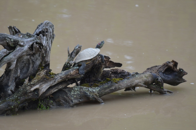Turtles, frog and chipmunk! St. Catharines, ON