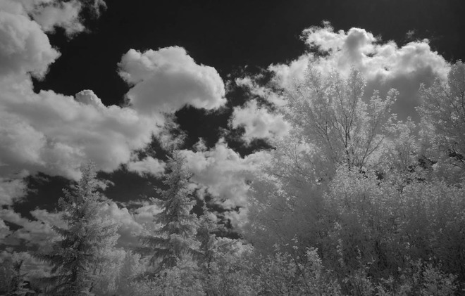 Clouds and Trees Lethbridge Alberta