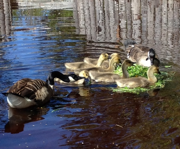 Family Time Birchy Bay, Newfoundland and Labrador Canada
