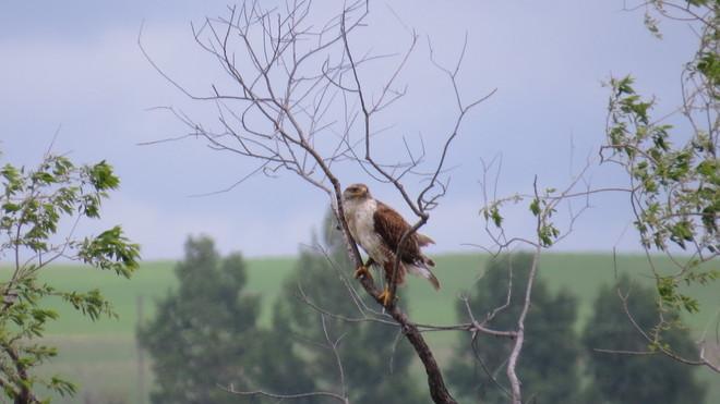 eagles nest Bow Island, AB