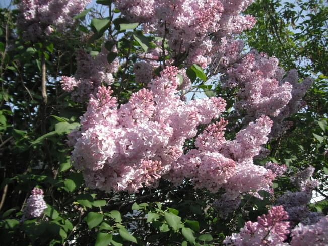 Miramichi flowers Miramichi, NB