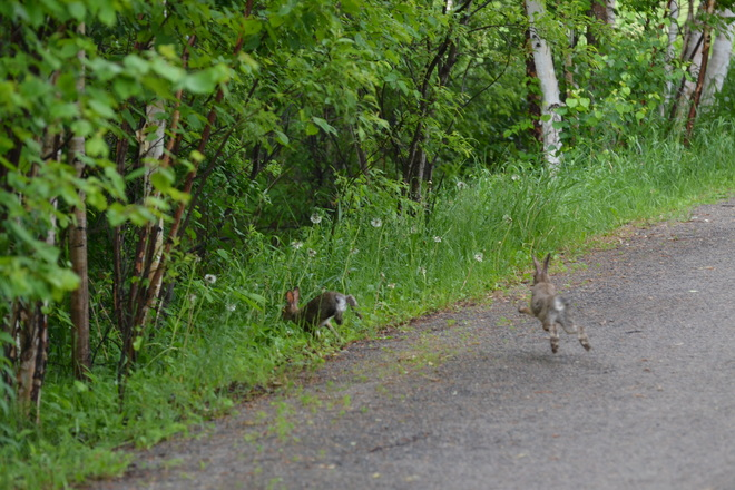 Baby Rabbits, all 4's in mid air Fielding Park, Ontario