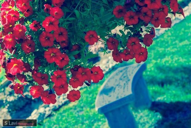 Garden Ottawa, ON