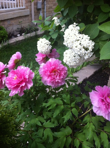 my garden Mississauga, Ontario Canada