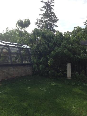 Tree fallen on greenhouse N3L 2N3