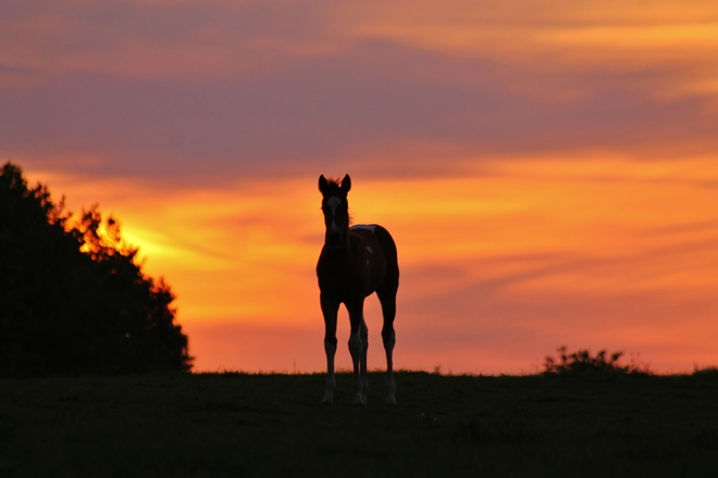 Horses at Sunset 2014 e4l 1y4
