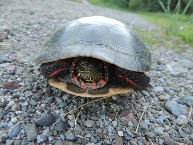 Mr. Turtle Cold Creek Conservation Area, Nobleton, ON