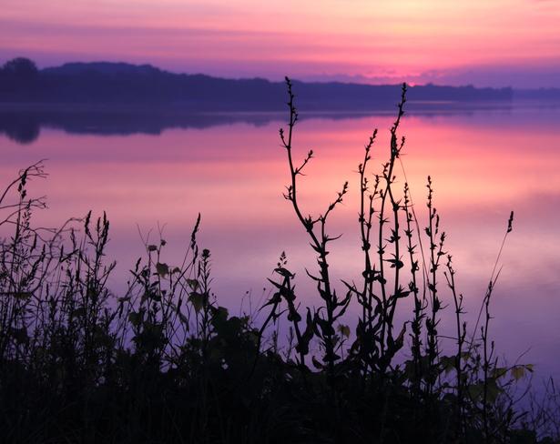 Pretty Dawn