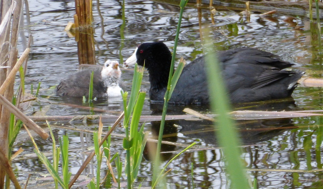 CUTE COOT NO LONGER!