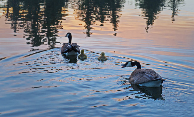Sunrise Family Swim Lethbridge, Alberta Canada