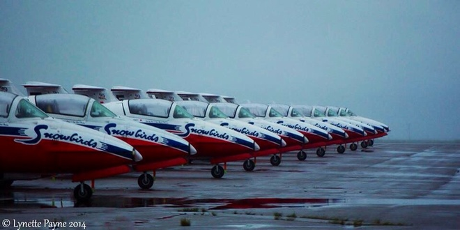 Snow Birds In The Rain Stephenville, Newfoundland and Labrador Canada