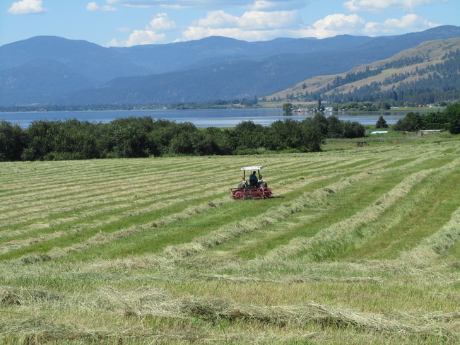 Making Hay in the Summer Sun Unnamed Road, Vernon, BC V1H, Canada