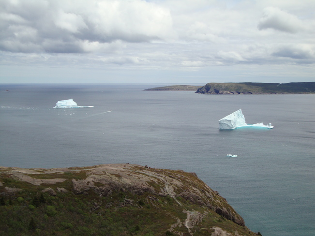 Icebergs and Pear Tree Blossoms Paradise NL and St. John's NL