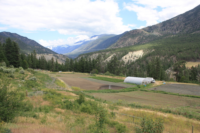 Beautiful day in our field Lytton, BC