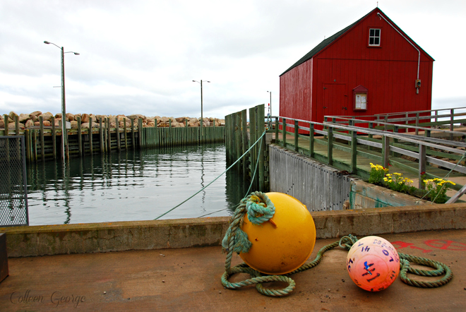 Summer and the Red Shed Hall's Harbour, NS